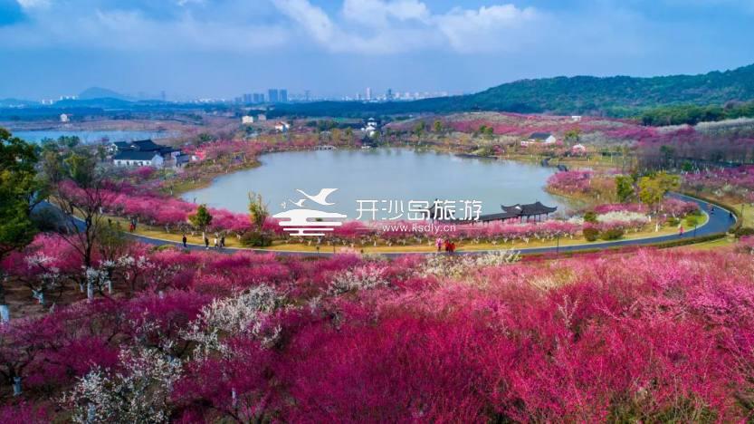 张家港香山风景区腊梅