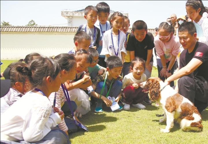 南通开沙岛警犬训练基地