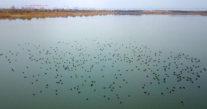 开沙岛迎来了最佳的观鸟季节